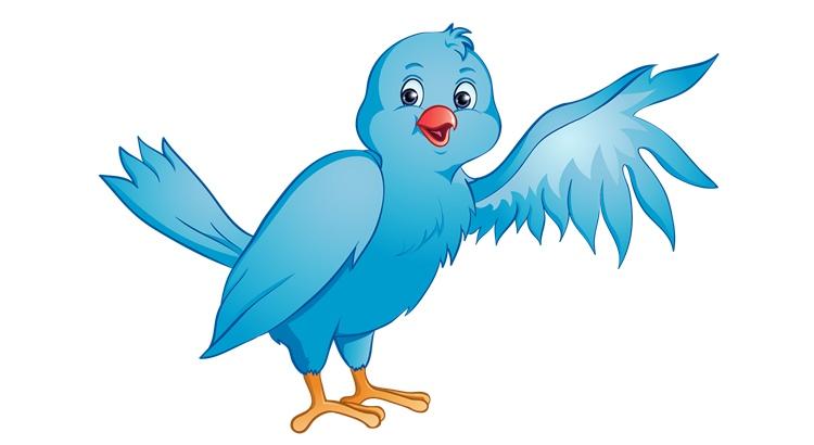Заговоры на птиц